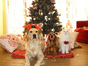 two dogs and a cat in front of the christmas tree waiting for their connolly's red mills go native healthy treats