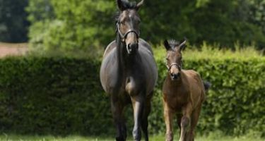 Step by step guide to mare and foal nutrition