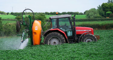 Role of Applying Pre-Harvest Glyphosate