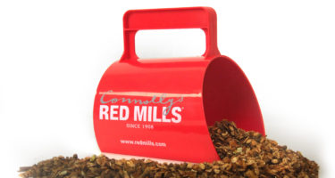 Why is molasses added to Connolly's RED MILLS feeds?