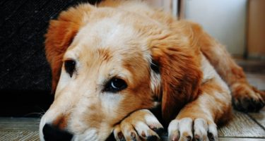 Is it time to bring in a dog behaviourist?