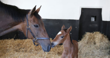 Extra Nutritional Support for the Newborn Foal