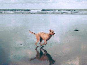 the dog exercise at the beach