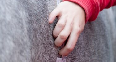 Unwanted weight loss in horses