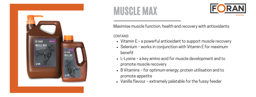 Foran Equine Muscle Max